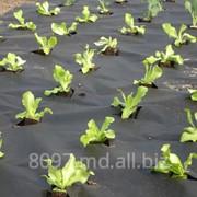 Агроволокно фото
