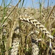 Зерно-тортовые операции. фото