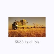Услуги выведения и выращивания зерновых культур фото