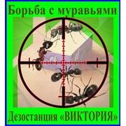 Борьба с муравьями, дезинсекция, дератизация, уничтожение, грызунов,насекомых в Алматы фото