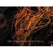 Электропроводка ДВ1792 фото