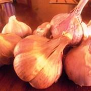 Чеснок продам Семена чеснока (воздушка) фото