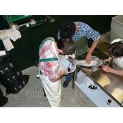 Реконструкция существующих проточных рыбоводных хозяйств на УЗВ фото