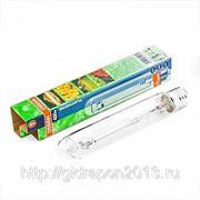 Лампа Osram Plantstar 400 W натриевая высокого давления фото