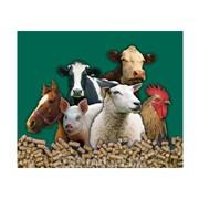 Витамины для домашних животных фото