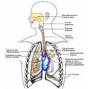 Воспалительные системы фото