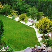 Обрезка деревьев,уборка сада. Полный спектр услуг по озеленению фото