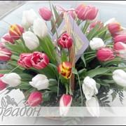 Корзинка с тюльпанами фото