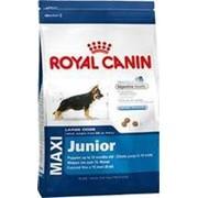 Royal Canin 15+3кг Maxi Junior Сухой корм для щенков крупных пород до 15 месяцев фото