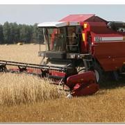 Комбайн зерноуборочный самоходный КЗС-1218 фото