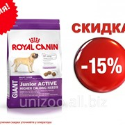 Сухой корм для щенков Royal Canin Giant Junior Active 15 кг фото