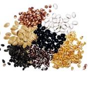 Протруйник насіння ХайКот Супер, 1*6,4 л фото