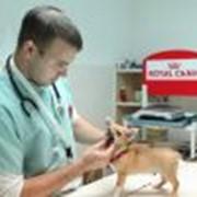Консультации ветеринарные в Кишиневе фото