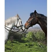 Прогулки на лошадях, обучение верховой езде фото