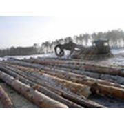 Лесозаготовка хлыстовая фото