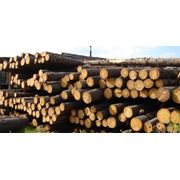Поставка лесоматериалов и пиломатериалов фото
