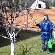 Опрыскивание сада. фото