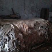 Шкура буйвола пр-ва Бразилия фото