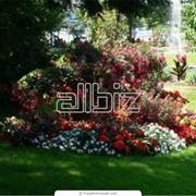 Ландшафтный дизайн и ландшафтное проектирование, Донецк фото