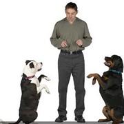 Воспитание собак! фото