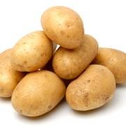 Наномикс-картофель фото