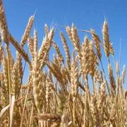 Сельхозпредприятие в Черкасской области. фото