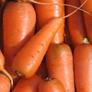 Морковь, Выращивание и продажа плодоовощных культур: морковь, помидоры, кабачки. Также, саженцы яблонь. фото