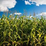 Сельхозпредприятие в Днепропетровской области. фото