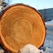 Распиловка древесины Житомирская область фото