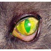 Окраска роговицы флюоресцеином фото