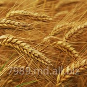 Cereale in Moldova,Cereale in Chisinau фото