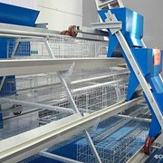 Оборудование для птицефабрик. фото