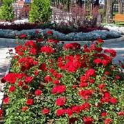 Устройство цветников и клумб №17 фото