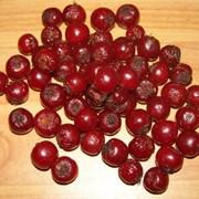 Боярышник плоды, ягоды фото