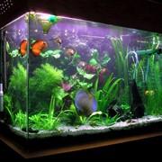 Чистка аквариумов Краснодар фото