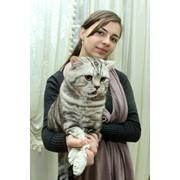 Организация выставок котов, Международные выставки кошек КЛК Фелина в Алматы фото