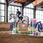 Обучение верховой езде(конный спорт). фото