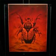 Сувенир голографический с подсветкой настольный Жук фото