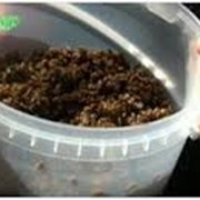 Роялти инновационной агротехнологии Эко-гидролиза фото