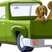 Зеленая карта, страховка фото