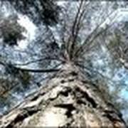 Экспорт лесопродукции фото