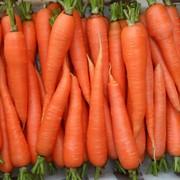 Морковь свежая фото