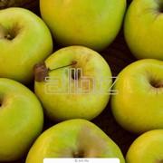 Яблоки оптом фото