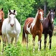 Доходы на навозе коней фото