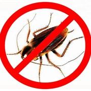 Дезинсекция (уничтожение насекомых) фото