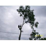 Спилить опасное деревоудалить дерево фото