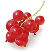 Смородина красная «Йонкер Ван Тетс» фото