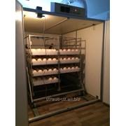 Инкубация страусовых яиц фото
