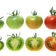 Листовая обработка помидор Kelik Calcium фото
