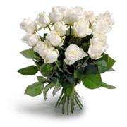 Цветы Житомир фото